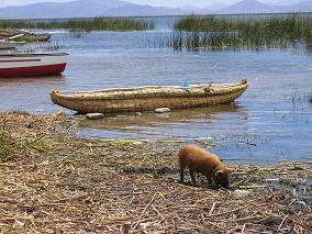reedboat.JPG